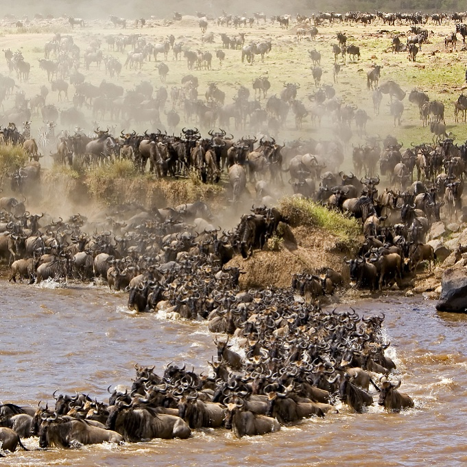 Tanzania safari tour Wildebeest Safari Migration