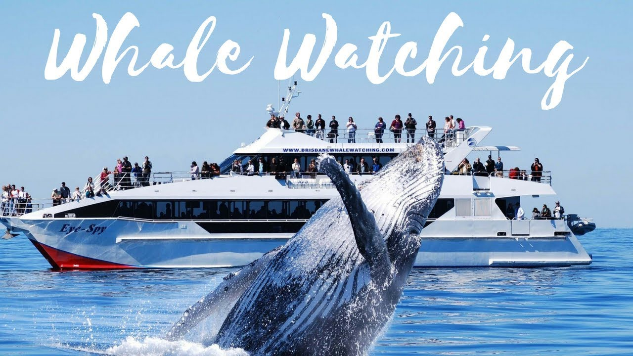 "WHALE WATCHING TOUR - ""MIRISSA"""